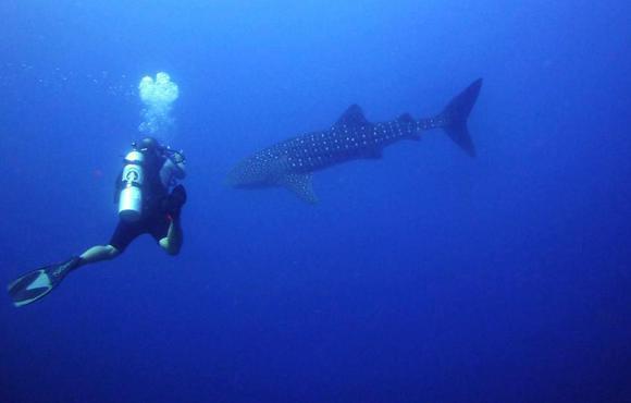 flores - whale shark full_10060_515530778508240_1748886422_n