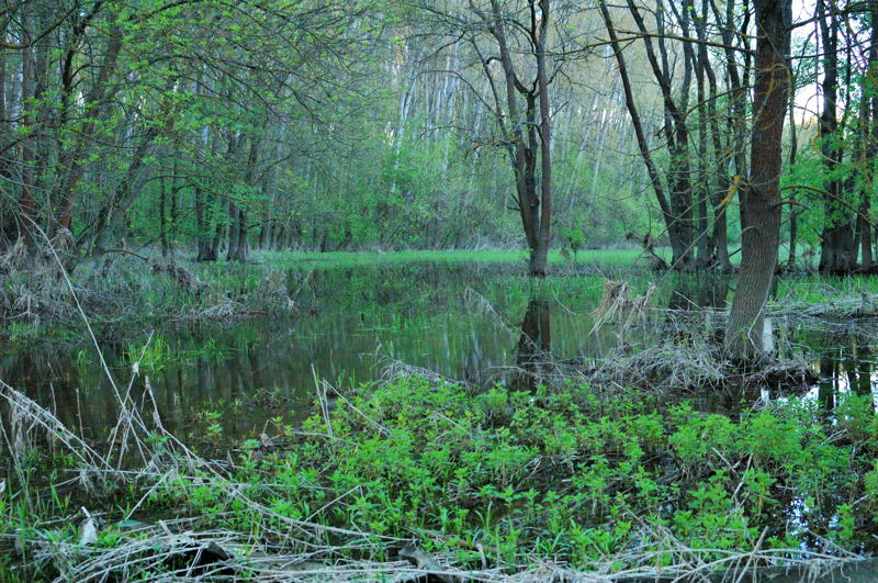 KUTAI flooded_forest_02