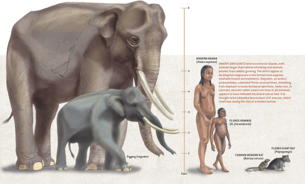stegodon scientificamerican0205-56-I2